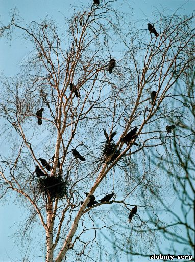 Птица лесная птица семейства